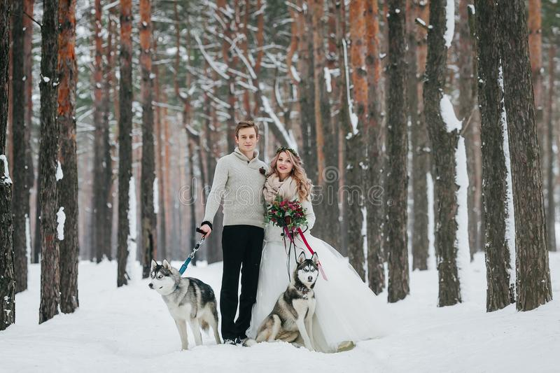 Beautiful bride and groom with two siberian husky are posed on background of snowy forest. Artwork. Copy space stock photography