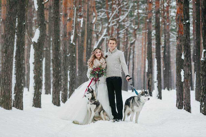 Beautiful bride and groom with two siberian husky are posed on background of snowy forest. Artwork. Copy space royalty free stock photo