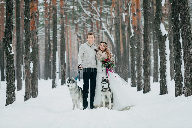 Beautiful bride and groom with two siberian husky are posed on background of snowy forest. Artwork. Copy space stock photo
