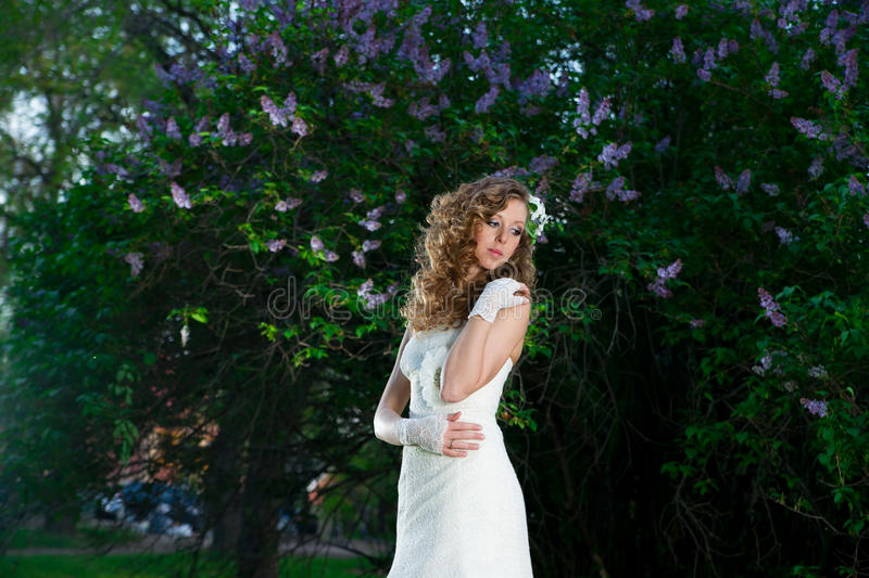 Beautiful bride in a white dress on a lilac background in spring stock photo
