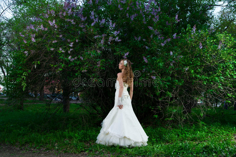 Beautiful bride in a white dress on a lilac background in spring royalty free stock image