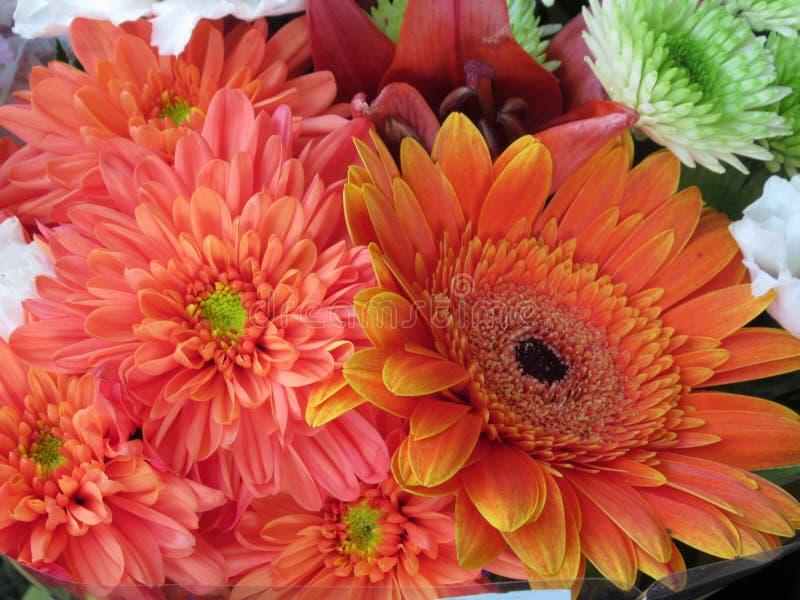 Beautiful Bright Close Up Orange Gerbera Daisy And Dandelion Flowers Bouquet stock image