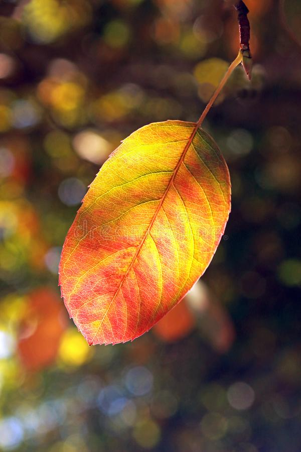 Autum leaf with vibrant colors stock photo