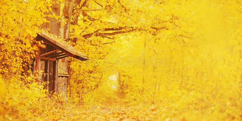 Beautiful bright autumn panoramic landscape. Yellow and orange trees in forest. Autumn leaves fall from branches on a sunny day. royalty free stock photography