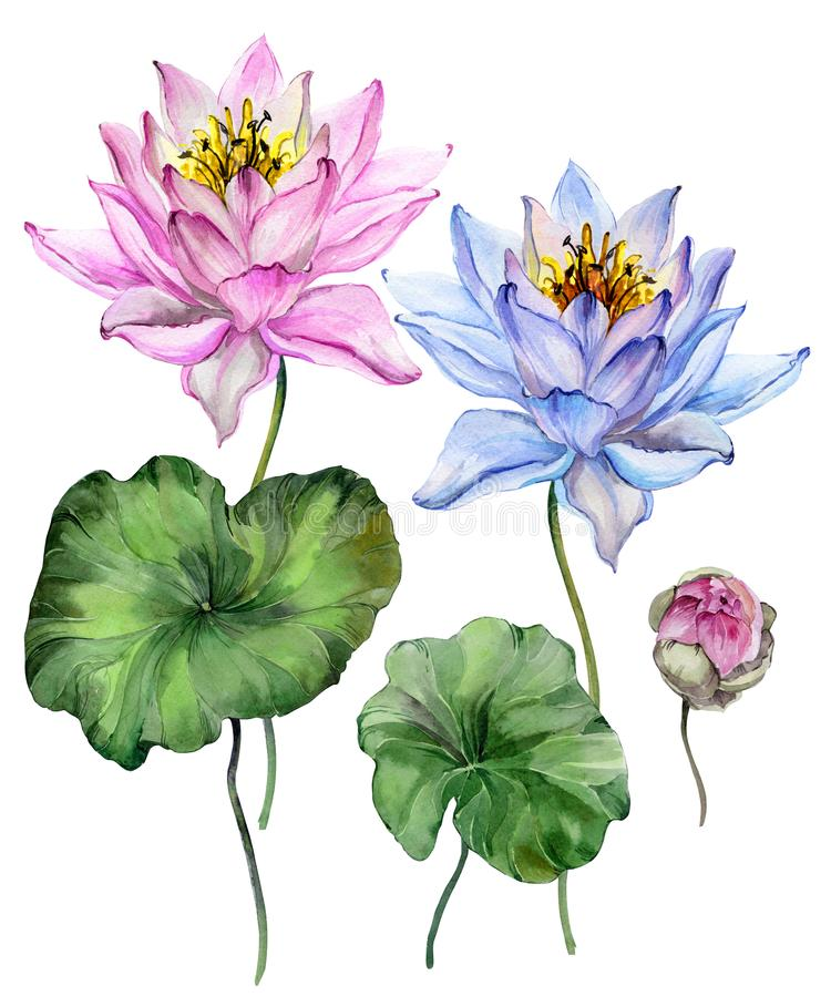Beautiful bright blue and purple lotus flowers. Floral set flower on stem, bud and leaves. Isolated on white background. royalty free illustration