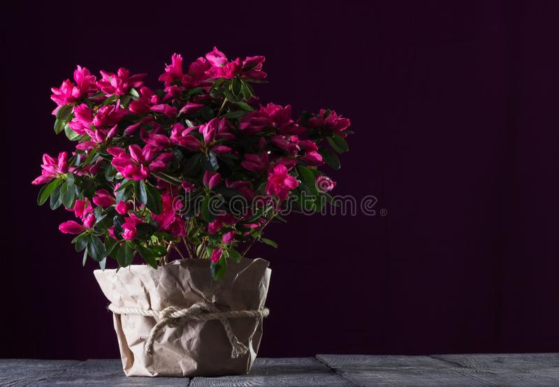 Beautiful bright bouquet of red azaleas on the boards on dark background royalty free stock photography