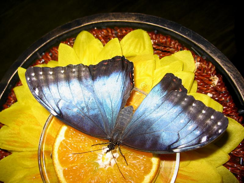 Beautiful bright butterfly sitting on a yellow flower stock photos