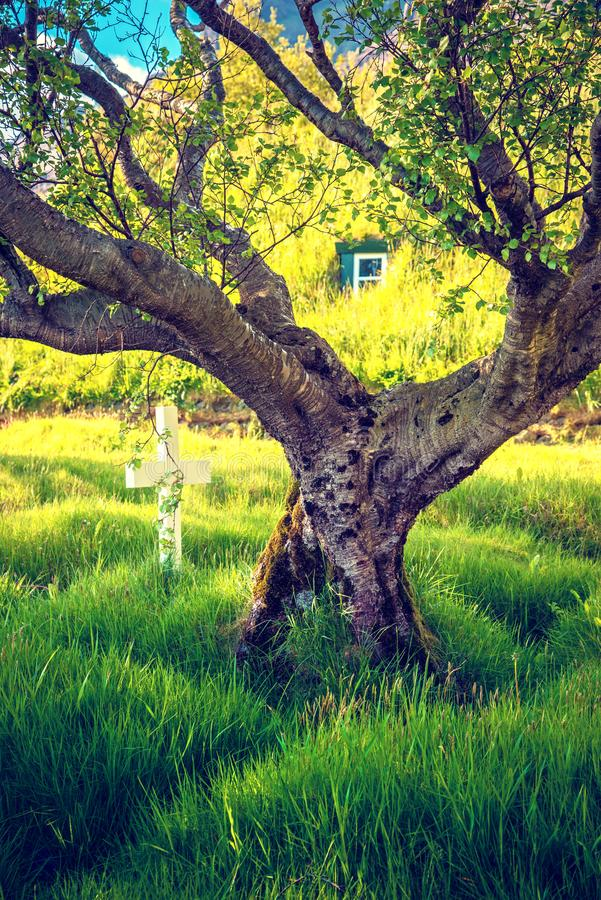 Beautiful bright color landscape with twisted tree in the cemetery in Hof, Skaftafell, Iceland. Exotic countries.  royalty free stock photos