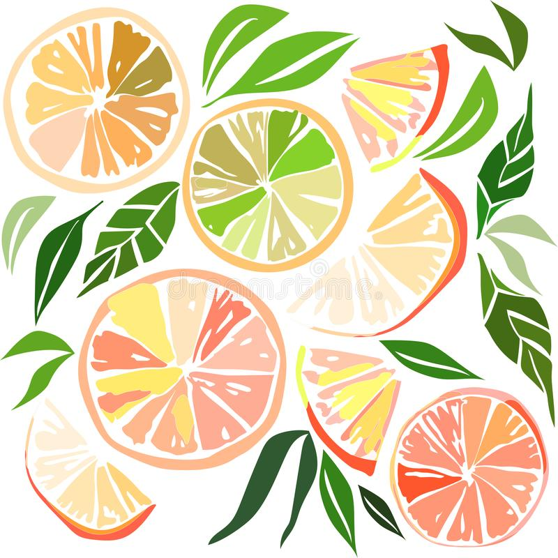 Beautiful bright colorful delicious tasty yummy ripe juicy lovely orange summer autumn dessert slices of oranges and mandarins pat. Tern illustration. Perfect royalty free illustration