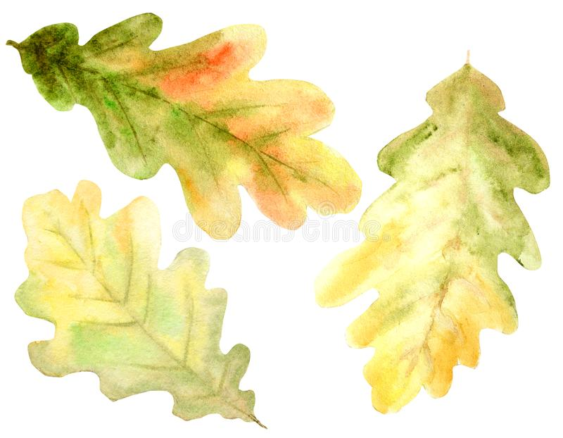 Beautiful bright colors set of autumn oak leaves, branches and acorns. Hand drawn illustration stock illustration