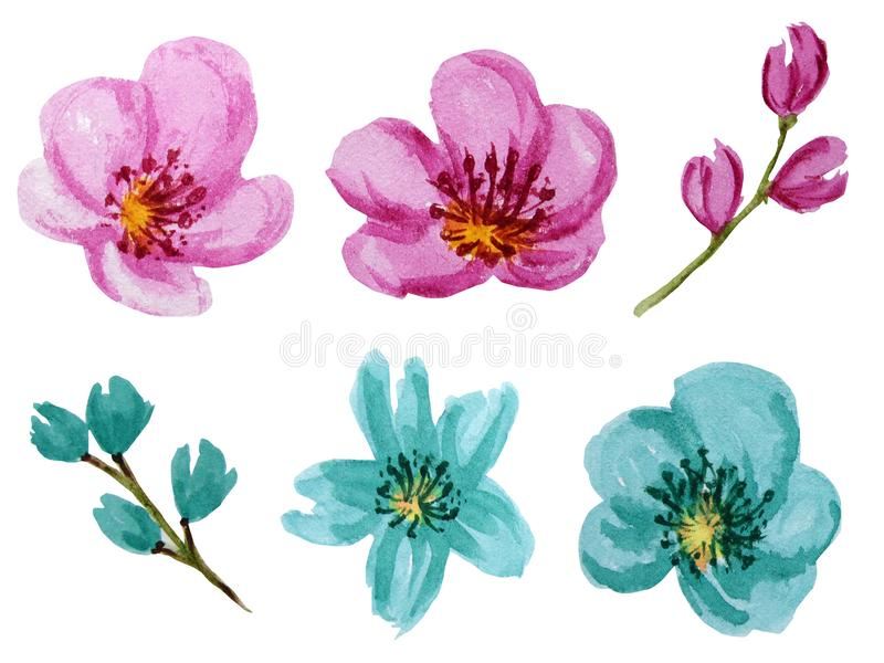 Beautiful bright colors watercolor flowers set. Pink and turquoise flower Isolated on white background. Beautiful bright pink and turquoise watercolor flowers stock photos