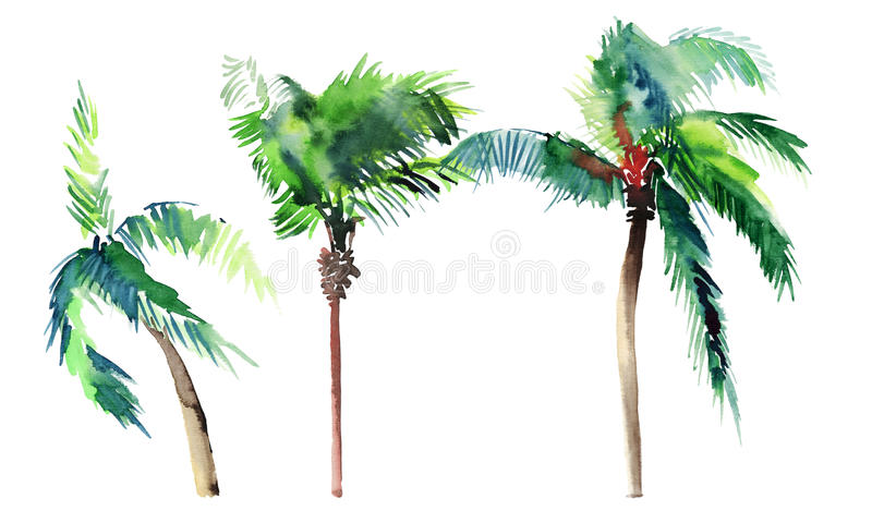 Beautiful bright cute green tropical lovely wonderful hawaii floral herbal summer three palm trees watercolor hand sketch vector illustration