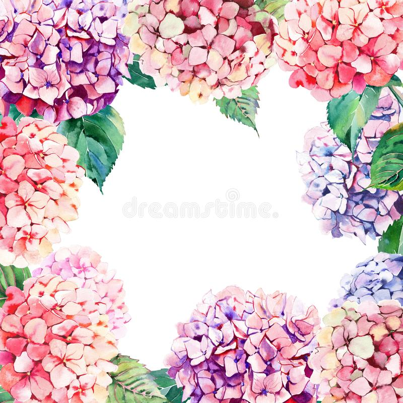 Beautiful bright elegant autumn wonderful colorful tender gentle pink herbal floral hydrangea flowers with green leaves frame. Watercolor hand illustration royalty free illustration