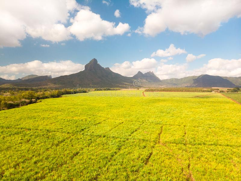 Beautiful bright green landscape of sugarcane fields in front of the black river national park mountains on Mauritius royalty free stock photography