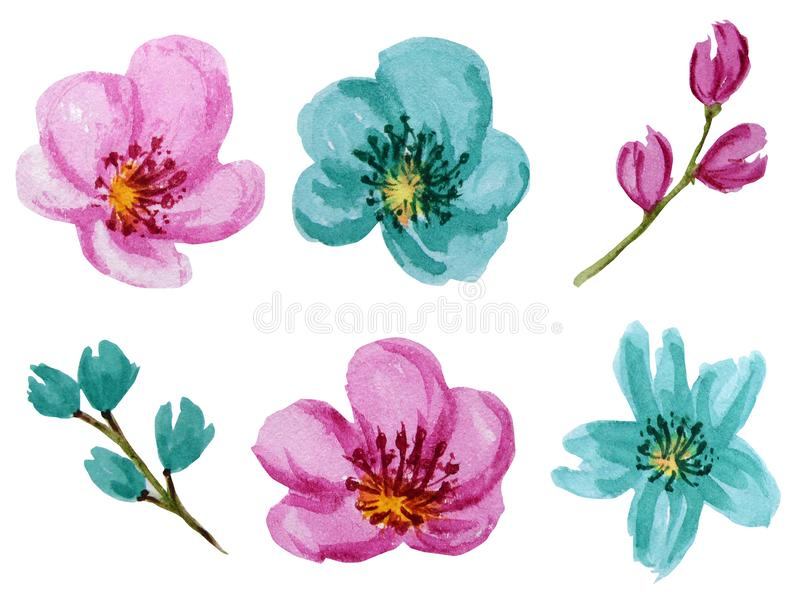 Beautiful bright colors watercolor flowers set. Pink and turquoise flower Isolated on white background. Beautiful bright pink and turquoise watercolor flowers royalty free stock photography