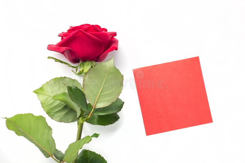 Beautiful bright red rose with red sticker for your text. Valentine day. symbol of love. Beautiful bright red rose with red sticker for your text. Valentine day stock photo