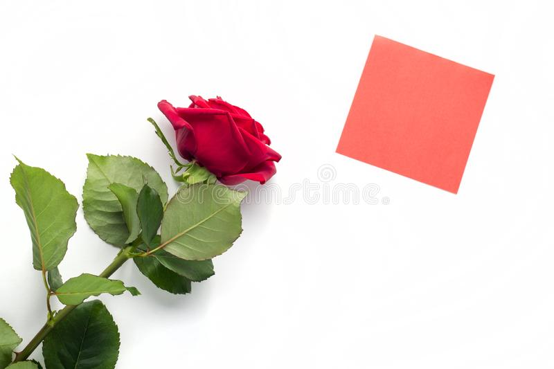 Beautiful bright red rose with red sticker for your text. Valentine day. symbol of love. Beautiful bright red rose with red sticker for your text. Valentine day stock images