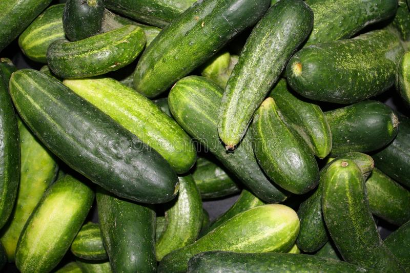 Beautiful bright rich assorted texture of cucumbers close-up. Country style, abundant harvest. stock images