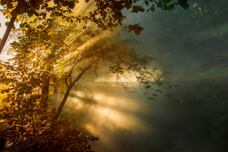 Beautiful bright sunbeams make their way through the morning mist and the foliage of trees. Picturesque landscape. Bright sunbeams make their way through the stock photos