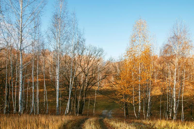 Beautiful bright sunny colorful autumn landscape with a road. Morning among trees with foliage in nature outdoors in an orange- royalty free stock photo
