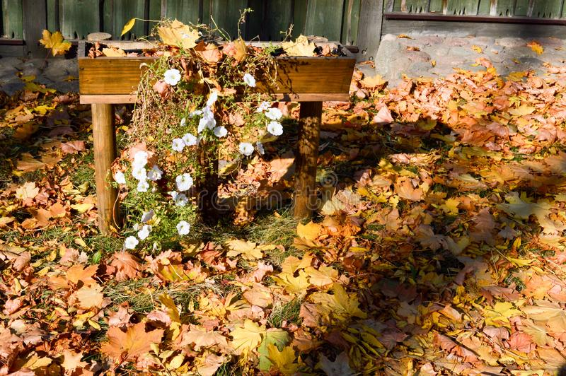 Beautiful bright wooden flower bed for white flowers covered with a layer of autumn yellow fallen leaves royalty free stock photos