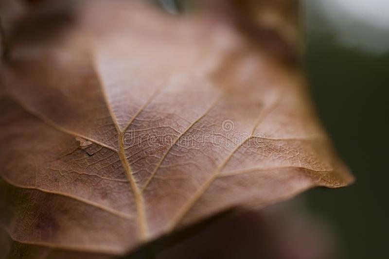 Brown autumn leaves on a green background close-up royalty free stock photos