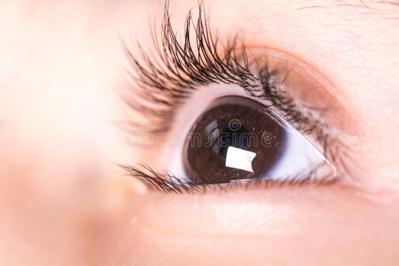 Brown child`s eyes stock images