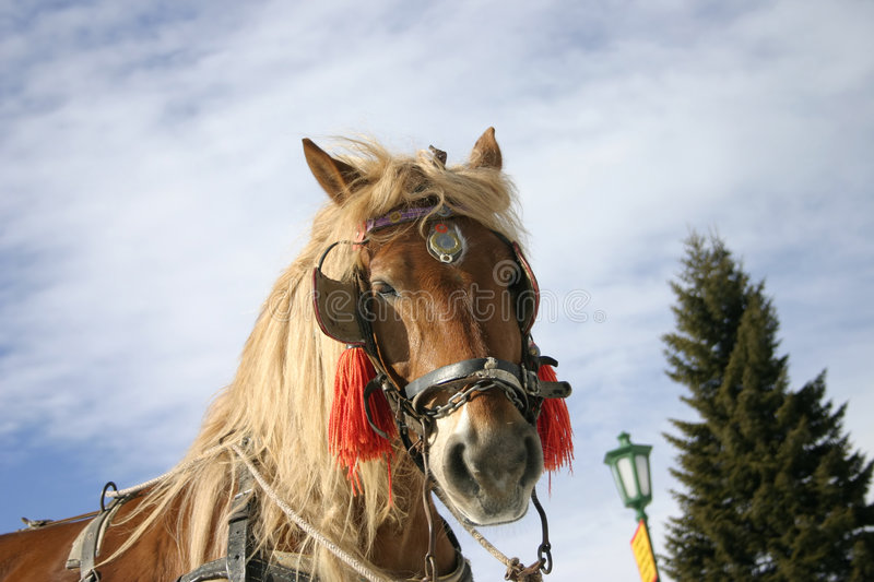 Beautiful brown horse 2 stock photography