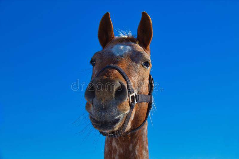 The face of a wonderful horse stock photos