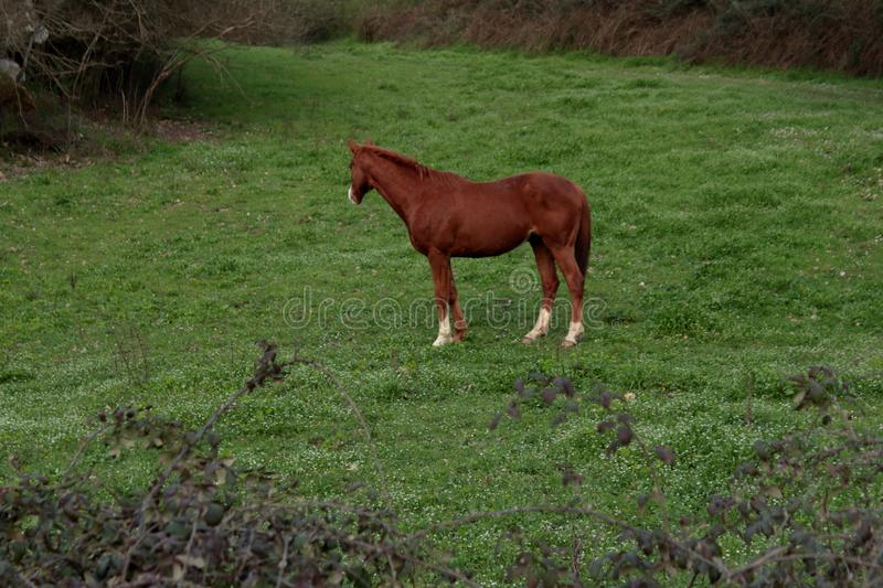 Beautiful brown horse on the farm royalty free stock images