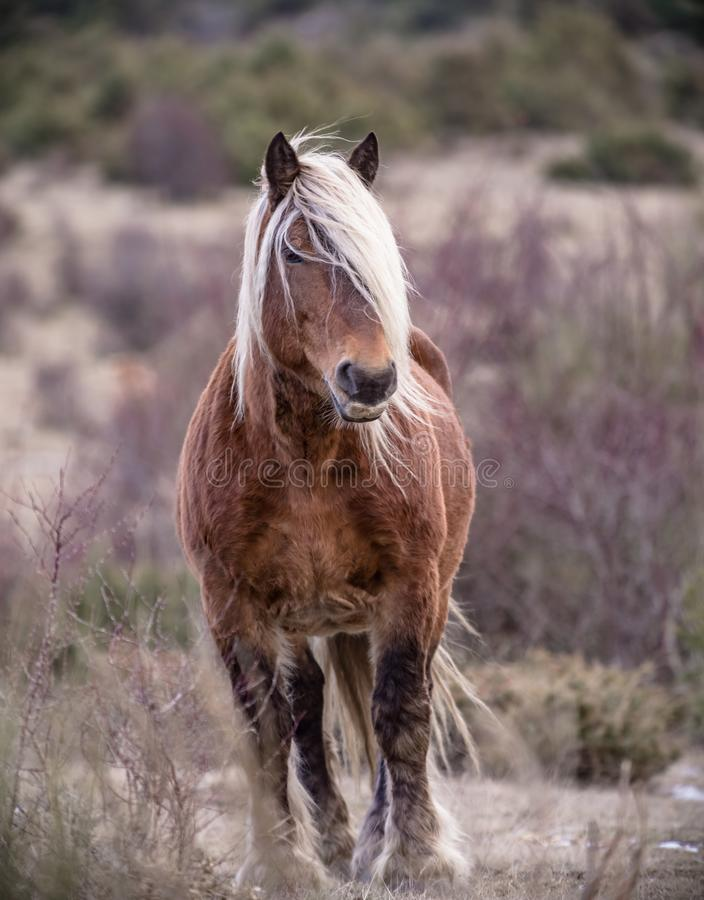 Brown horse in the field on a fall day royalty free stock photo