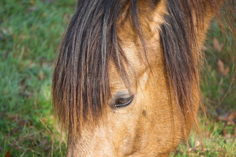 Beautiful brown horse portrait in the farm. In the nature stock images