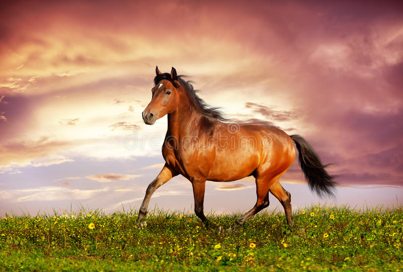 Download Beautiful Brown Horse Running Trot Stock Photo - Image: 29502384