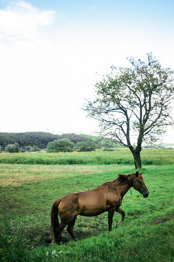 Beautiful brown horse walking and grazing in a field near a road stock photography