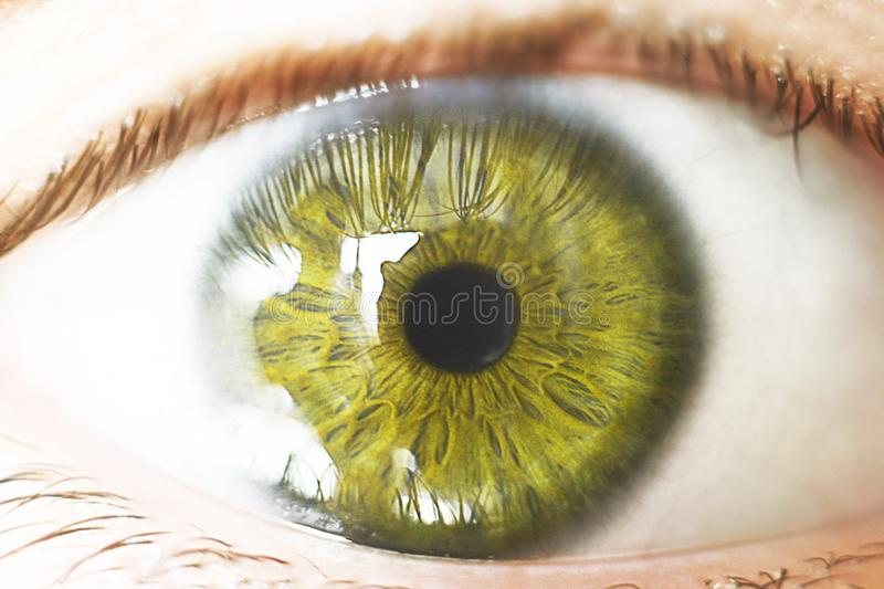 Beautiful brown human eye very close up macro photography royalty free stock photos