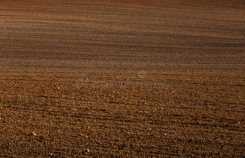 A beautiful brown pattern on a field in spring. Abstract, textured background. Shallow depth of field royalty free stock images