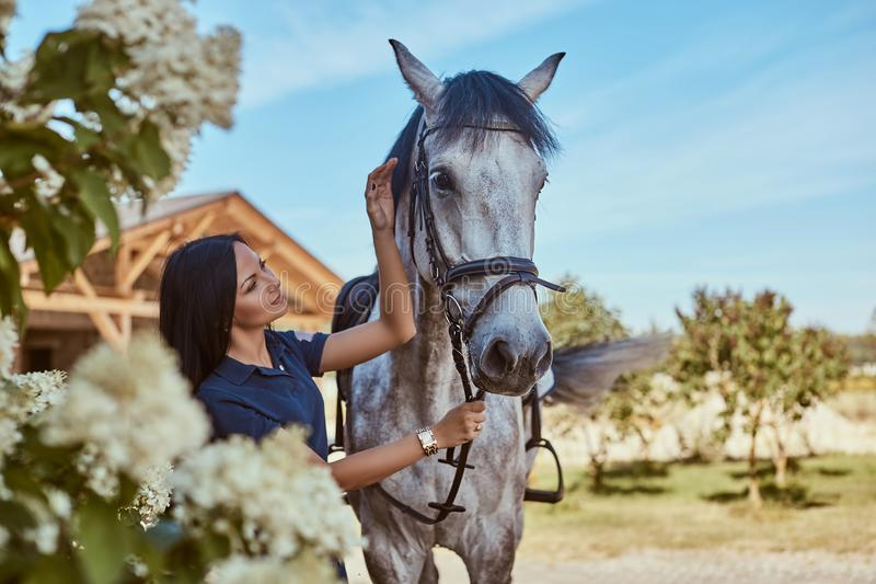 Beautiful brunette girl stroking her gray horse near lilac bushes in garden. royalty free stock photo