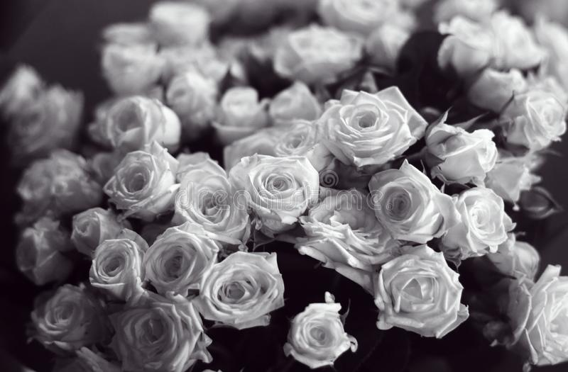 Beautiful bunch of black and white roses close up picture royalty free stock image