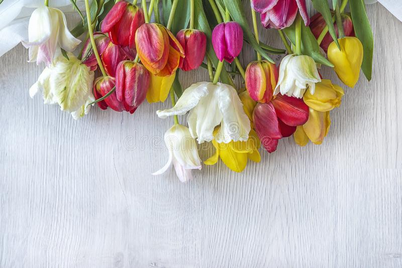 Beautiful bunch of multicolored tulips on the white wooden background. Bunch of multicolored tulips on the white wooden background with copy space stock photography