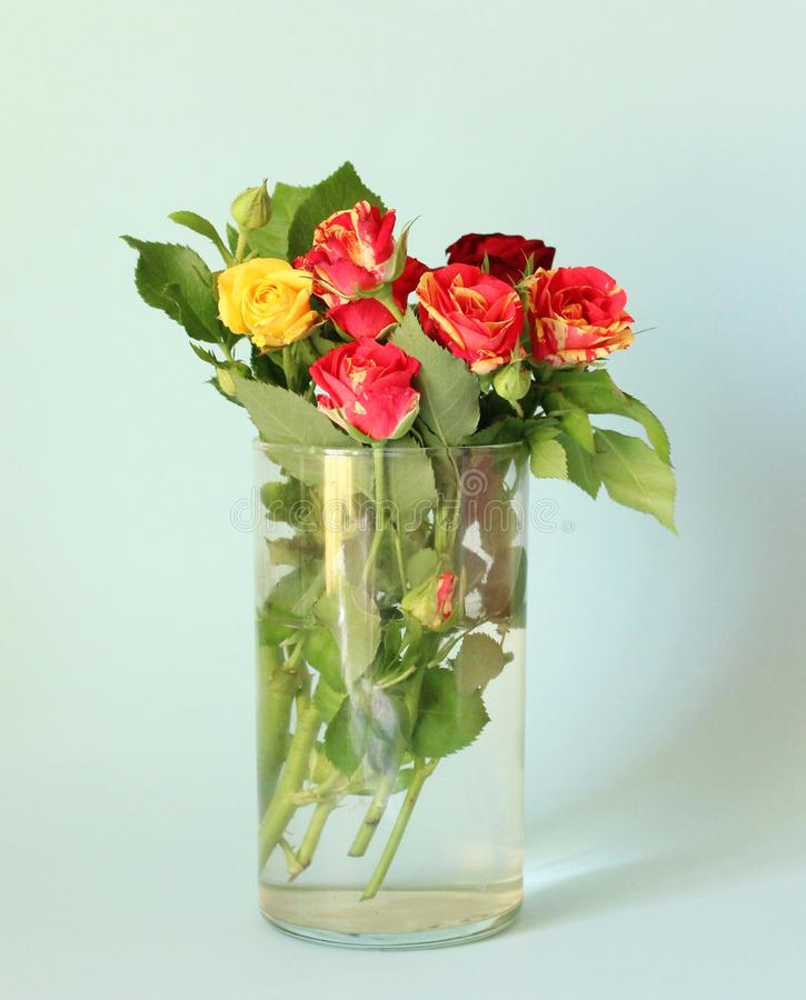 A beautiful bunch of roses royalty free stock photography