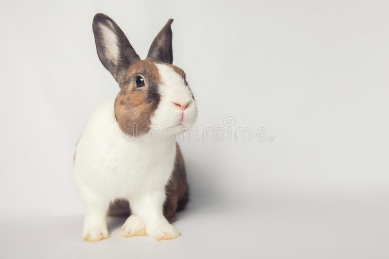 Beautiful Easter bunny with a broad charming smile stock photo