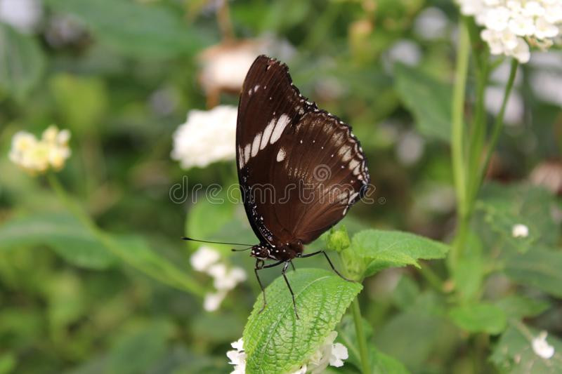A beautiful butterflies in the green plants. The wildlife. A beautiful butterflies in the plants. Summer time 2018. Exotics and Tropical style royalty free stock photography