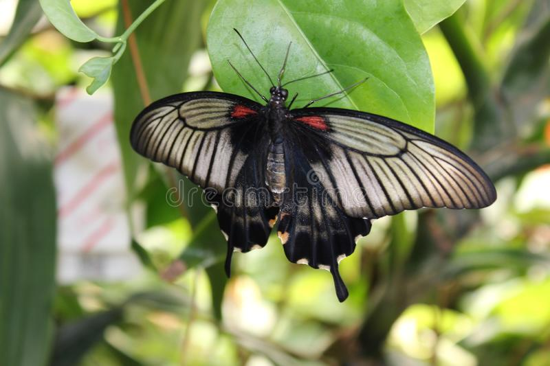 A beautiful butterflies in the green plants. The wildlife. A beautiful flowers and butterflies.nSummer time 2018. Exotics and Tropical style stock photo