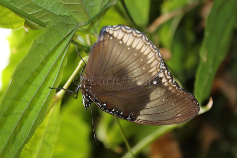 A beautiful butterflies in the green plants. The wildlife. A beautiful flowers and butterflies. Summer time 2018. Exotics and Tropical style stock photography