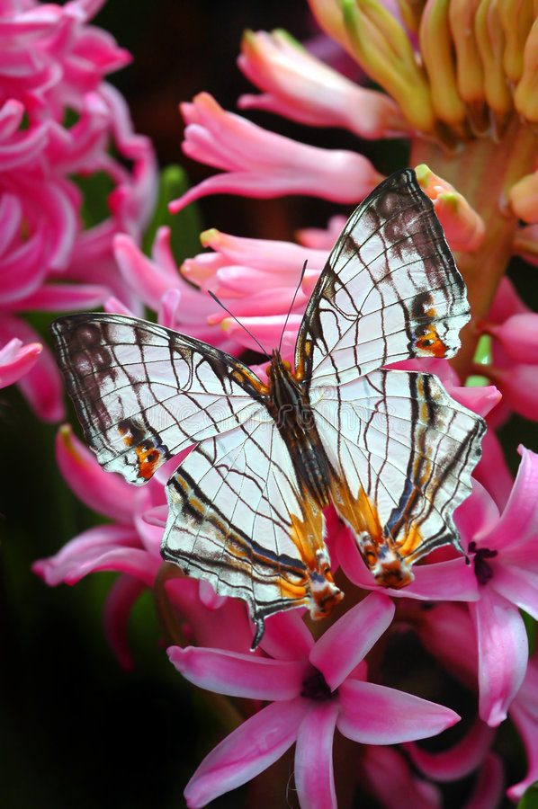 Beautiful Butterfly stock photography