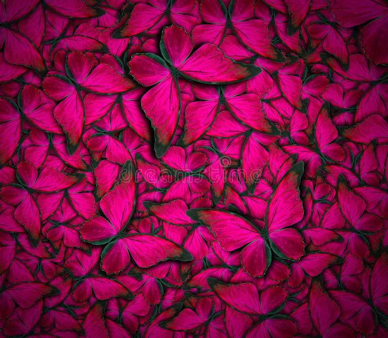 Beautiful butterfly background royalty free stock image