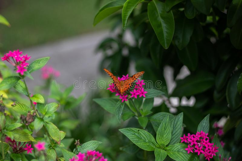 Beautiful butterfly on field royalty free stock photos