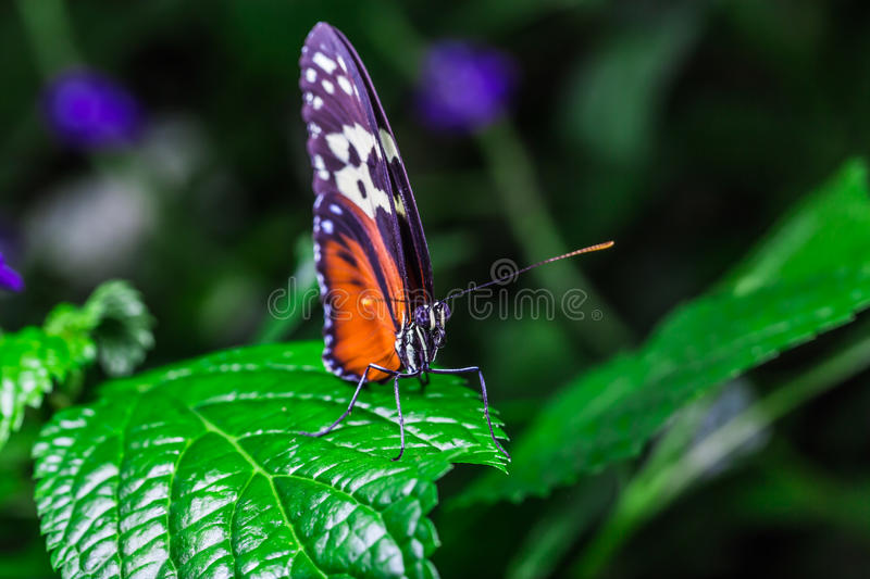 A beautiful butterfly on a flower royalty free stock photos