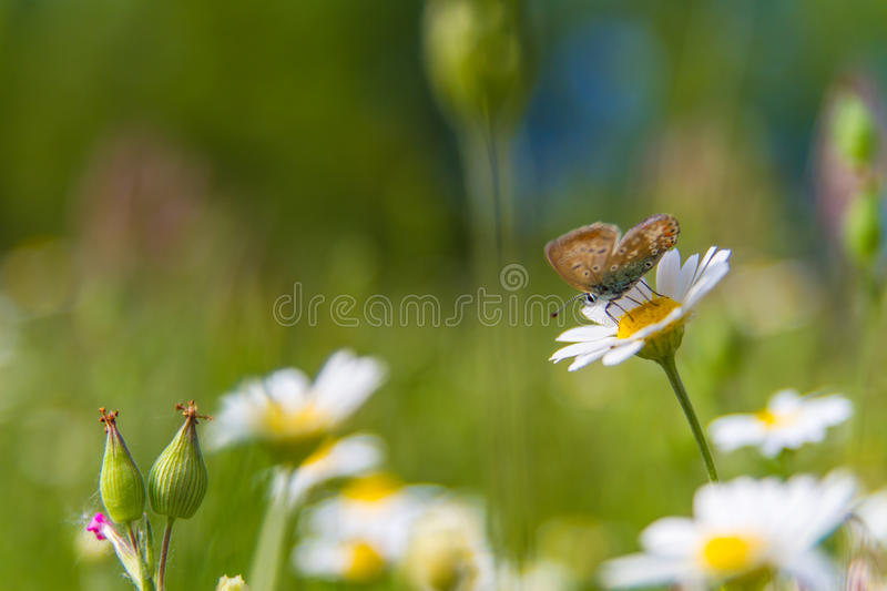 Beautiful butterfly and flowers. Monarch Butterfly on a Flower. Blue bokeh background. Wallpaper concept stock photo