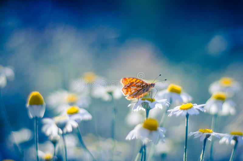 Beautiful butterfly and flowers. Monarch Butterfly on a Flower. Blue bokeh background. Wallpaper concept stock images